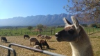 Umgeben von Bergen und Tieren – auf der Fynbos Farm in Ceres