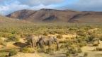 Elefanten zum Frühstück – auf einer Big-5-Safari im Aquila Game Reserve