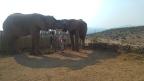 Den Elefanten ganz nah – im Buffelsdrift in Oudtshoorn
